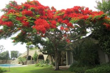 שיקולים בבחירת עצים לנטיעה בגינה